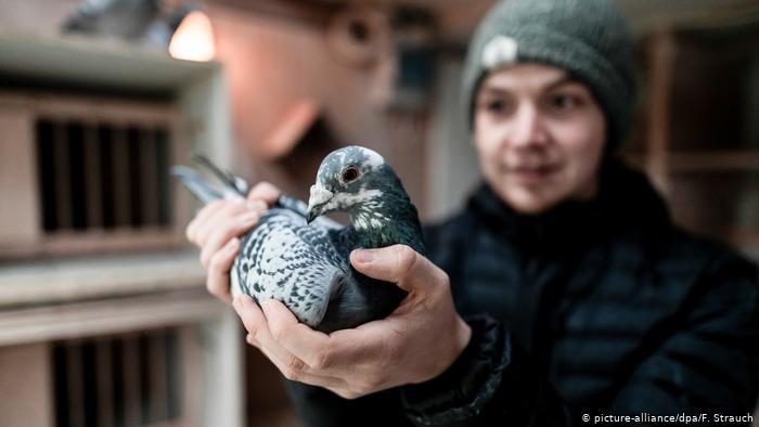 27-летний житель города Камен в Рурской области Марсель Краузе в своей голубятне