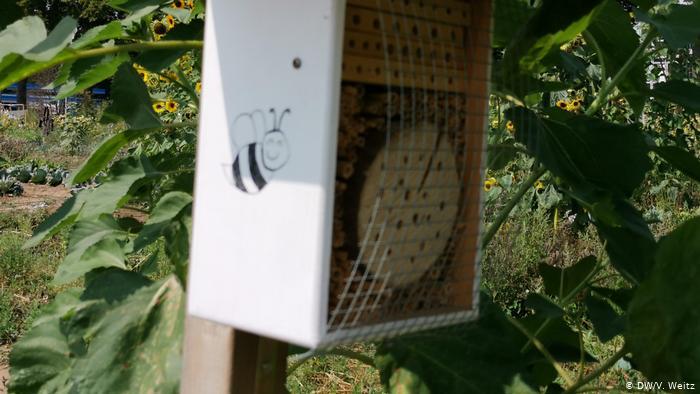 Домики для пчел.