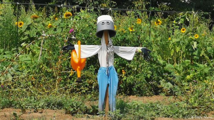 Огородное чучело в виде робота.