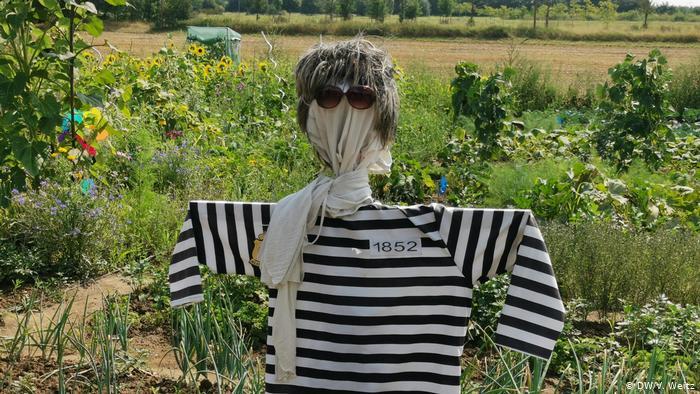 Огородные чучела отпугивают не только птиц, но и тех, кто хотел бы собрать чужой урожай!