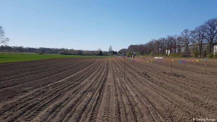 Так выглядело поле весной нынешнего года.