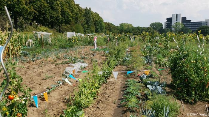 Так выглядят грядки огородников-любителей.