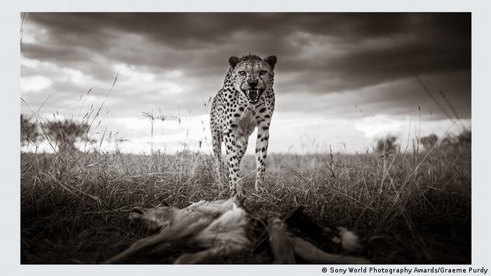 Sony World Photography Awards 2021. Graeme Purdy (Великобритания). Категория Окружающий мир и дикая природа, 2-е место.