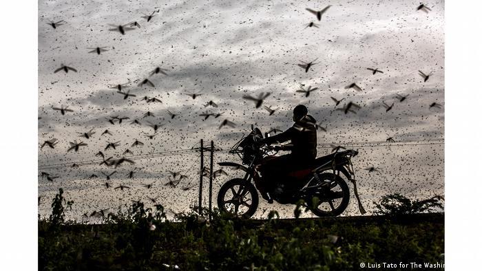 World Photography Award 2021. Luis Tato (Испания). Категория Окружающий мир и дикая природа, 1-е место.