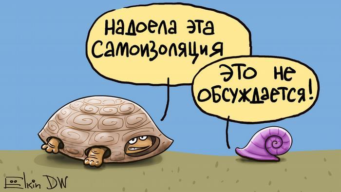 Улитка и черепаха обсуждают самоизоляцию в период пандемии коронавируса