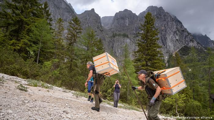Во время доставки ястребов в горы