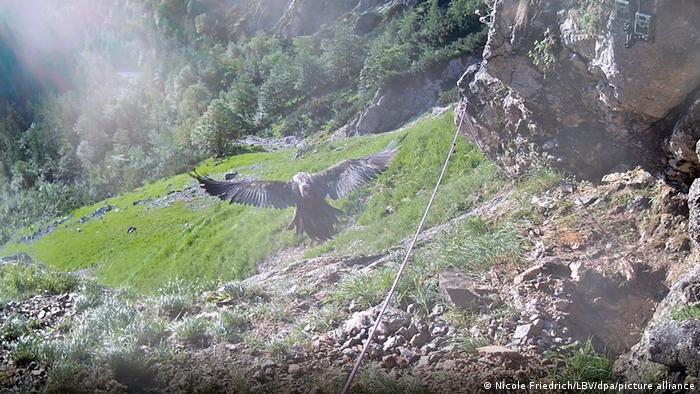 В середине июля камера видеонаблюдения запечатлела первый полет Уолли