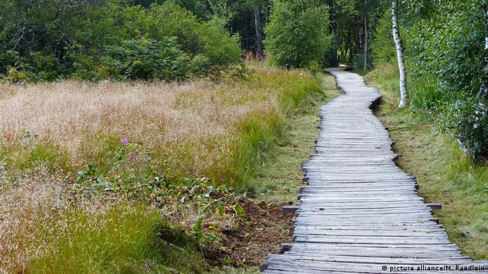 Немецкие поговорки о лесе