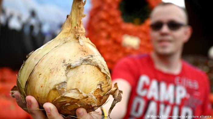 Огромная луковица