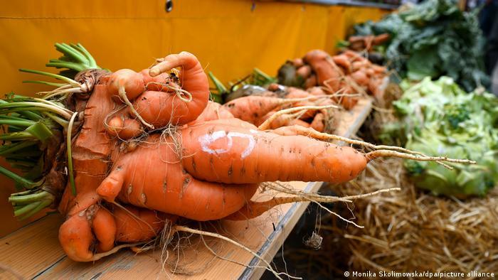 Гигантская морковь